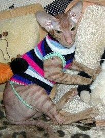 Как сделать носки для кота своими руками 319