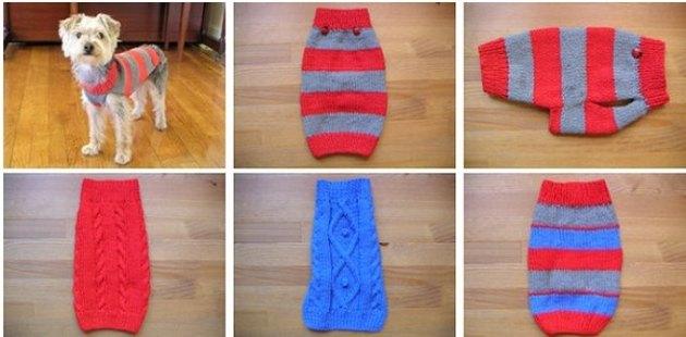идеи и схемы вязаной одежды для маленьких пород собак статья