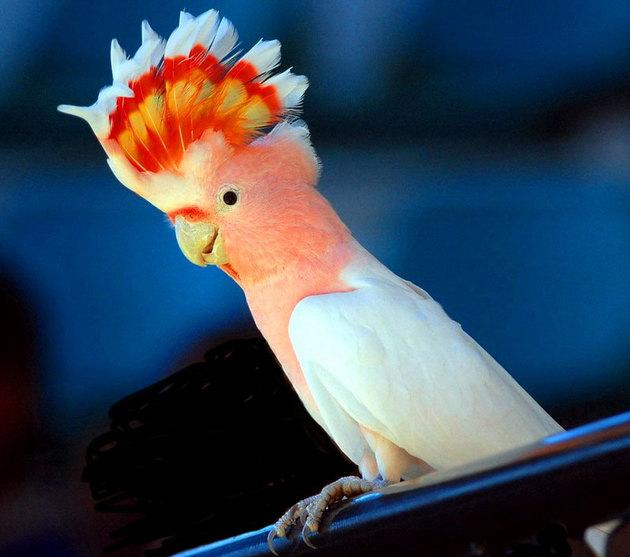 Смешные имена для попугаев