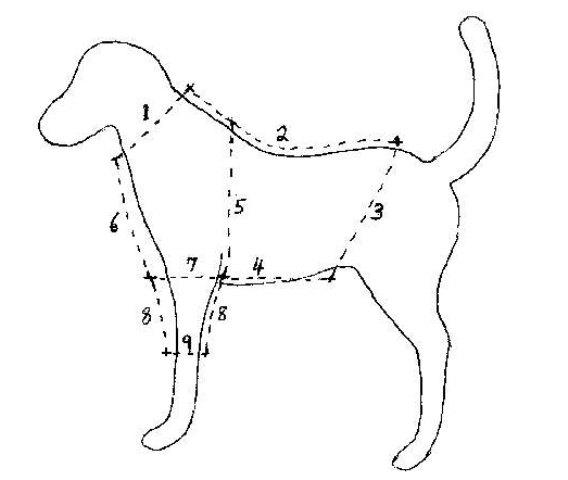 Сшить комбинезон для собаки своими руками выкройки