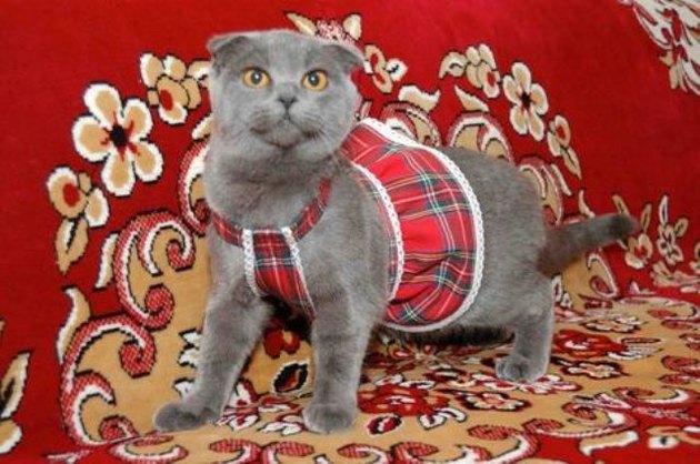 Платье на кошку сшить 38