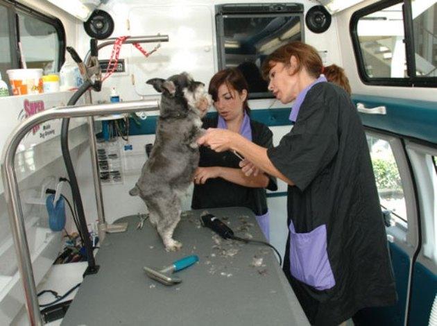 как выбрать машинка для стрижки собак