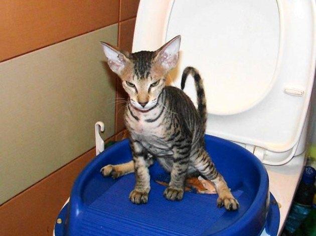 Как сделать чтобы кошки ходили в один  176