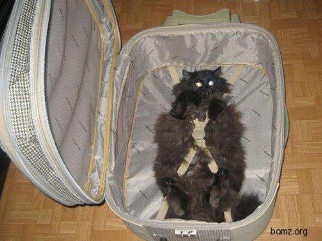 Какие документы для кота при перевозке в поезде
