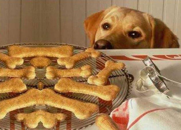 Печенье своими руками для собак